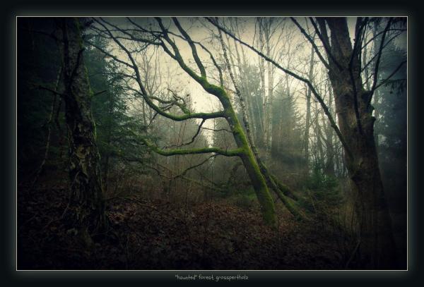 waldviertel, großpertholz, forest, moss, effect