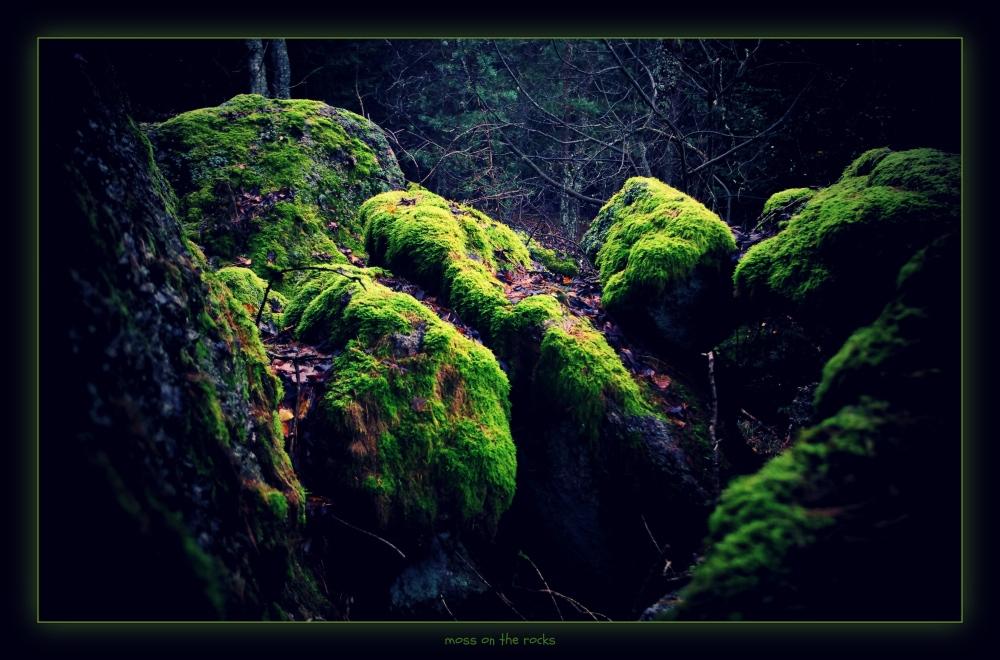 waldviertel, großpertholz, forest, rocks, moss