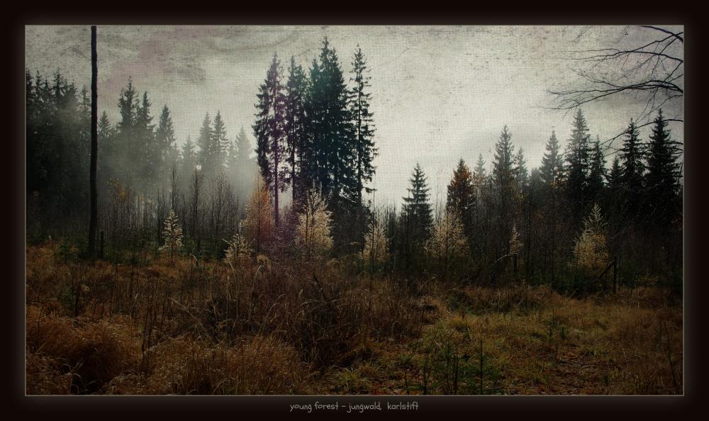 waldviertel, karlstift, young forest, sun, texture