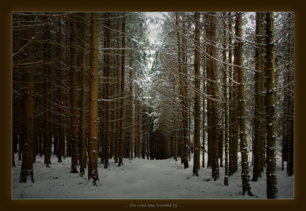waldviertel, hiking trail, spruce forest, snow