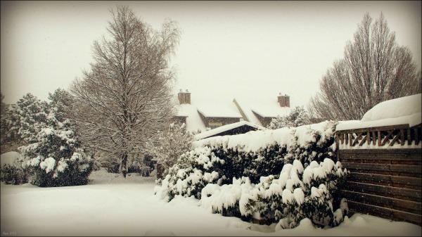 winter, garden, snow