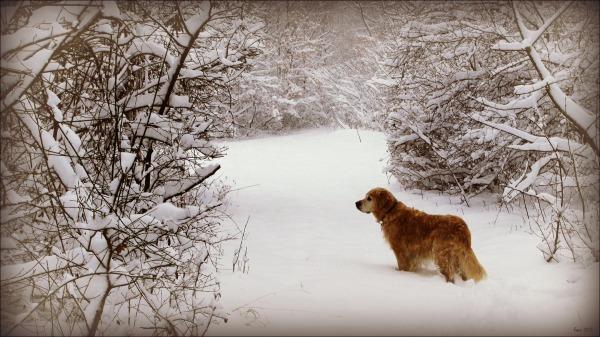 winter, snow, nelly, wilderness