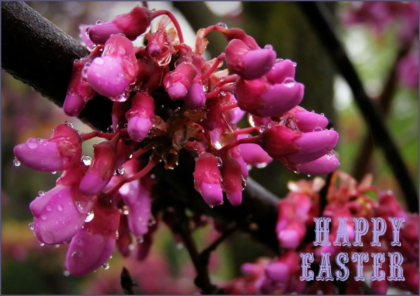 happy easter, red flower, raindrops