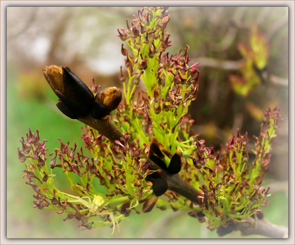 spring, bud, young leaves