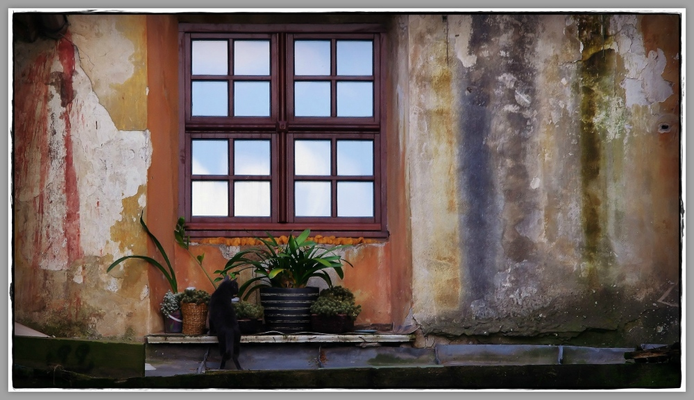 vilnius, backyard, window, cat, flower pots