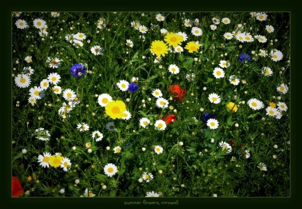 england, cornwall, summer flowers, heligan