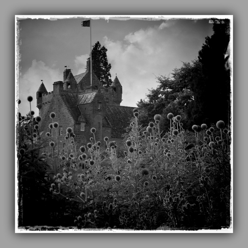 scotland, cawdor castle, thistles, bw