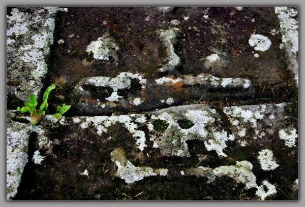 scotland, elgin cathedral, weathered gravestone