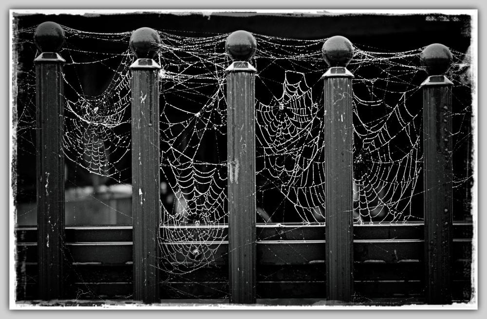 autumn, fence, cobwebs, bw