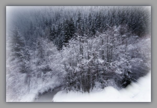 corvara, snow on trees, forest, focus