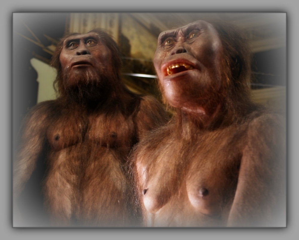 vienna, nhm, lucy, australopithecus-afarensis