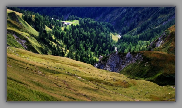 tirol, fiss, alpine pasture, cows, larch trees