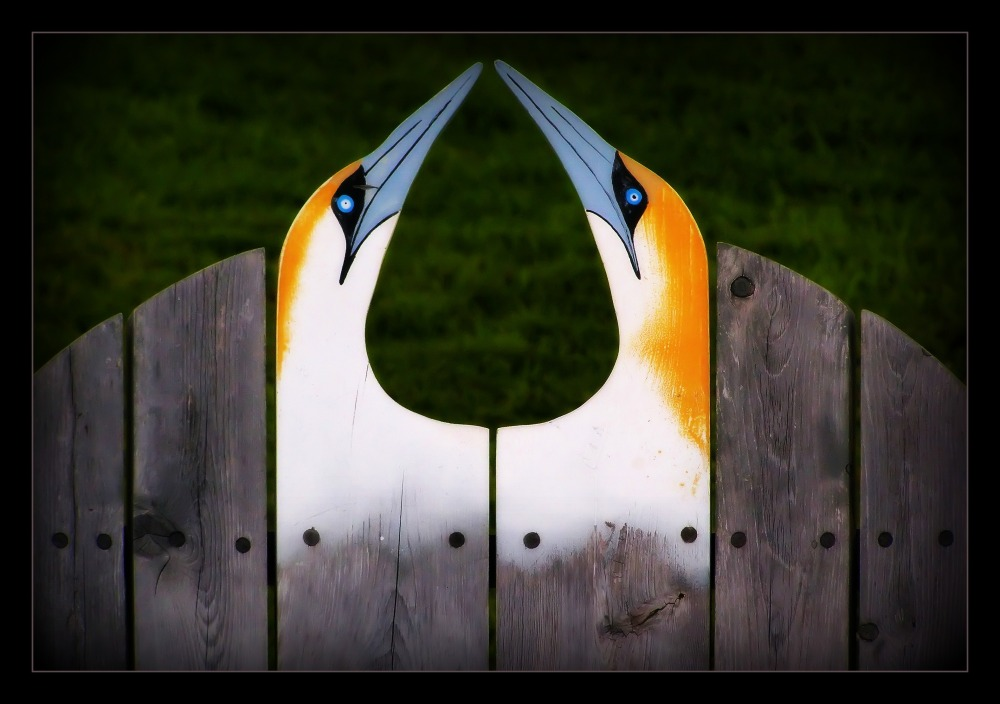 quebec, percé, deck chair, gannets