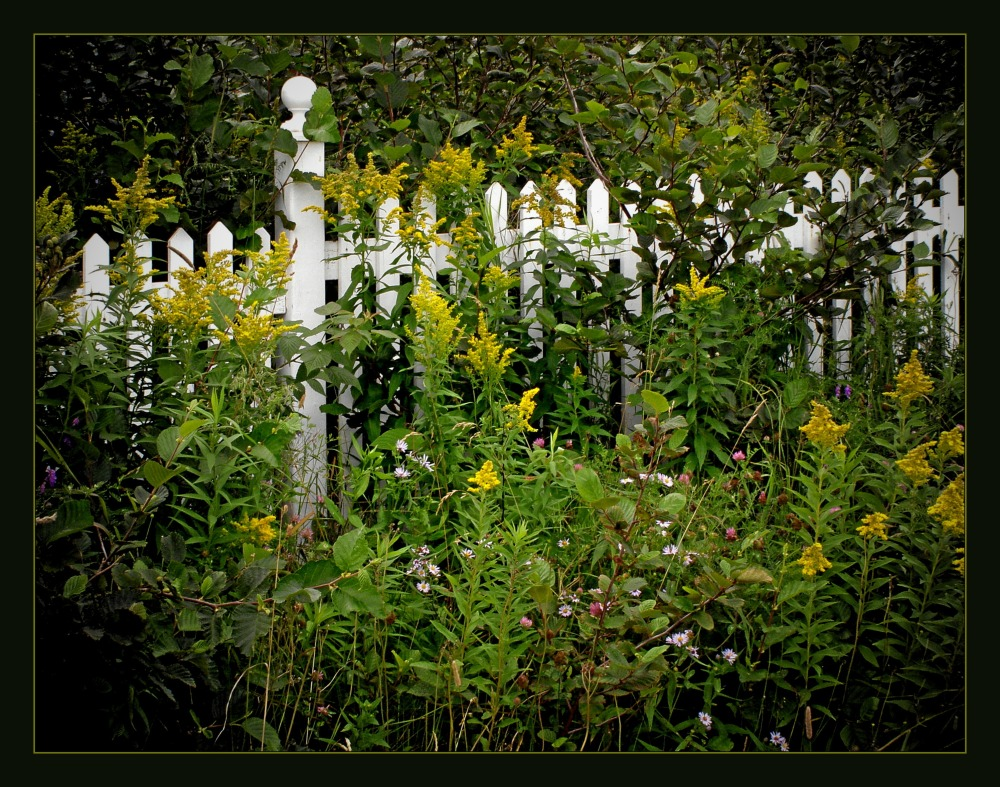 quebec, percé, white fence, wildflowers