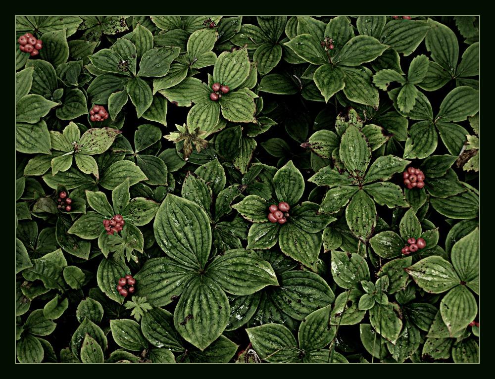 Like A Pre Raphaelite Wallpaper Plant Nature Photos