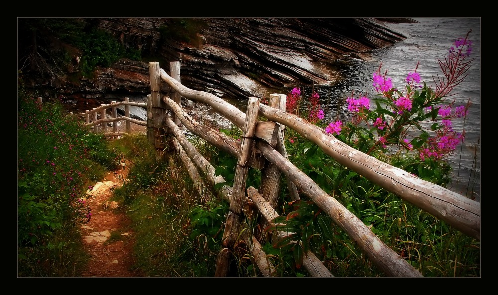 quebec, forillon n.p., fireweed, fence, path