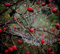 autumnal interlude  4