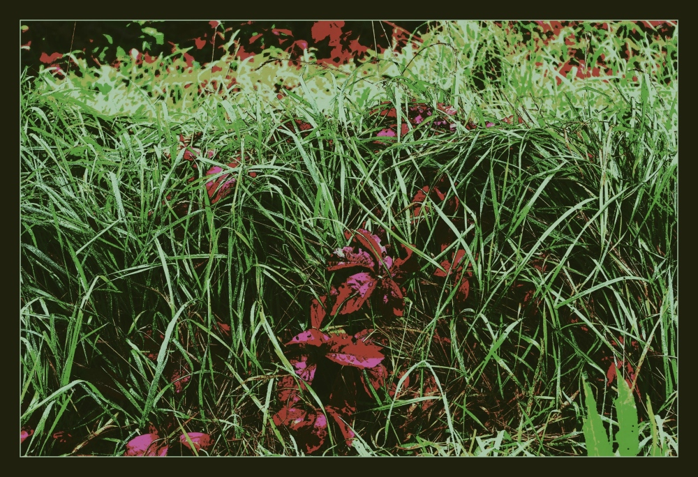 autumn, grass, leaves, posterised