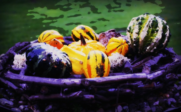 pumpkins, autumn, fall