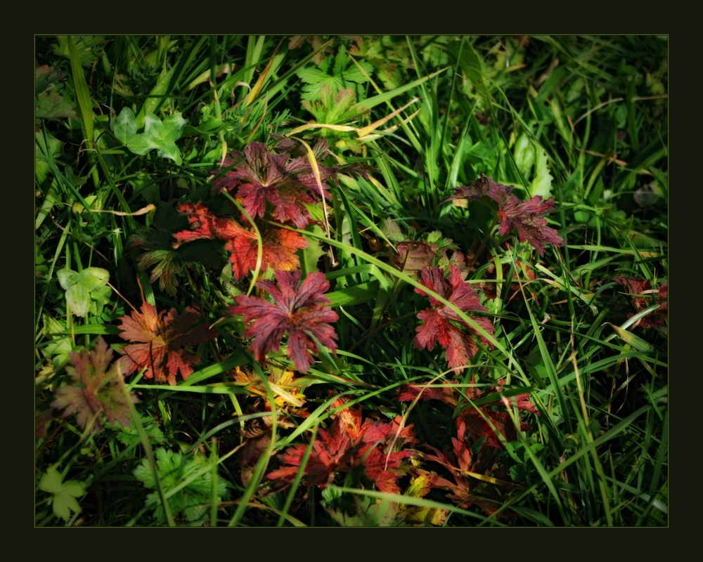 autumn, fall, grass, leaves, colour