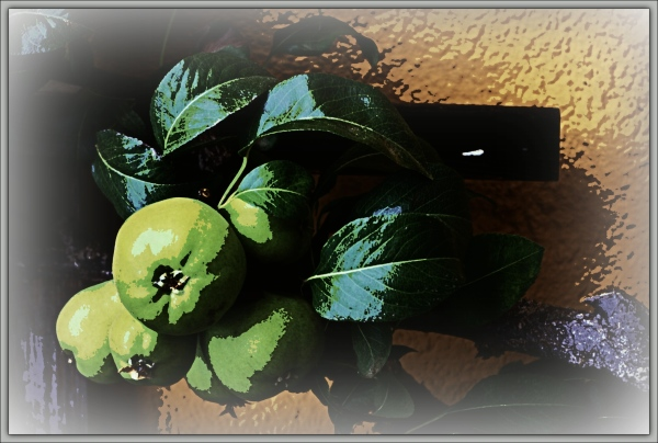 apples, posterised, experiment