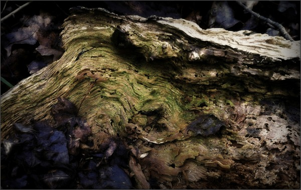 deadwood, leaves