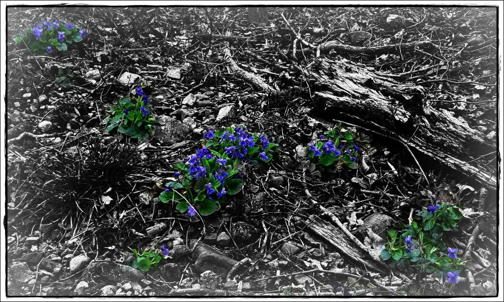 violets, wood, trees