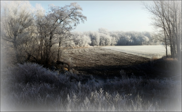 austria, winter, trees, field, frost