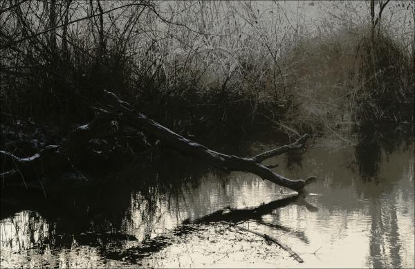 austria, winter, trees, creek, frost