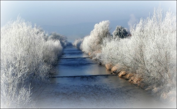 austria, winter, trees, creek, frost