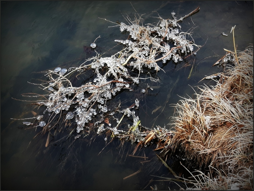 winter, river, ice, grass