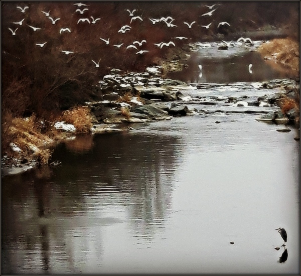 winter, river, birds