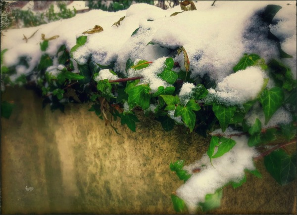 winter, snow, ivy, wall