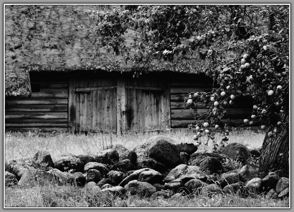 lithuania, rumšiškės, museum, barn, apples, bw