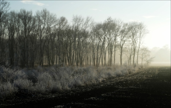 winter, wood, sun