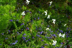 Scottish spring