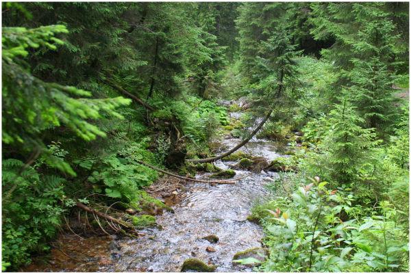 Tatra forest