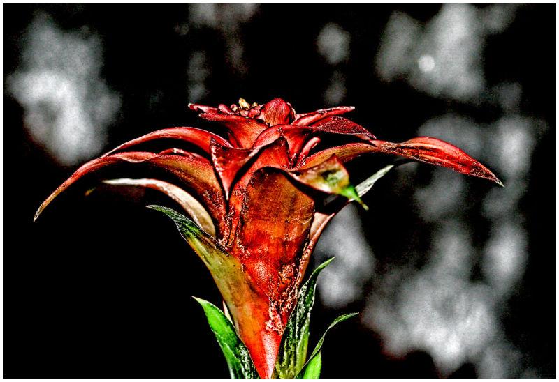 A flower ?