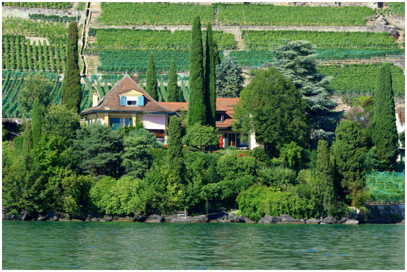 Vineyard on the shore of the lake