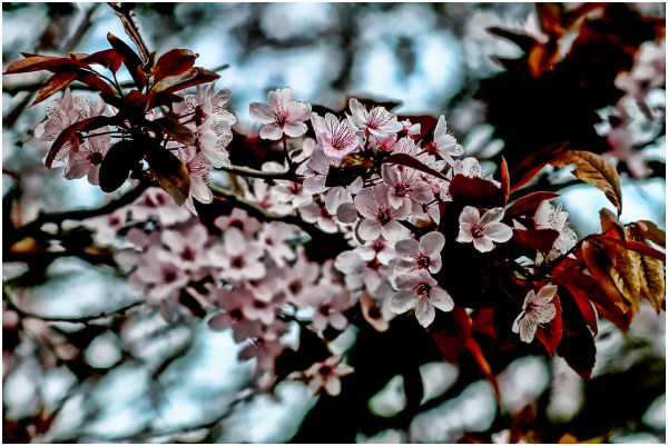 Spring in attack.