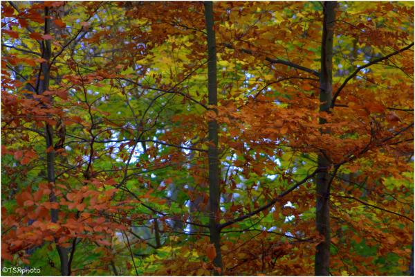 Autumn around the Lake 3