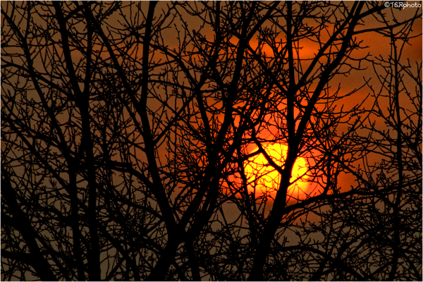Sunset in branches