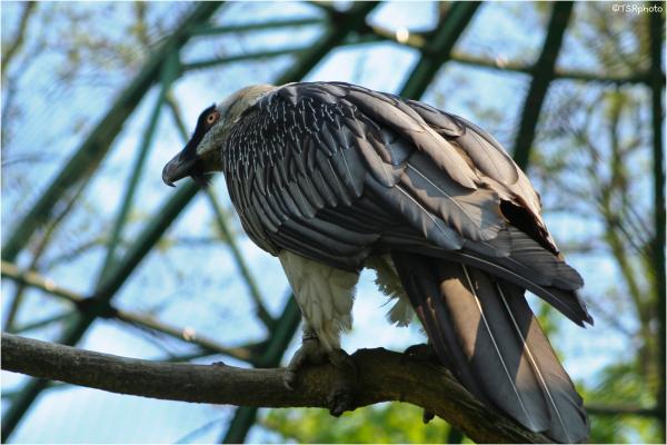 birds adler wingns
