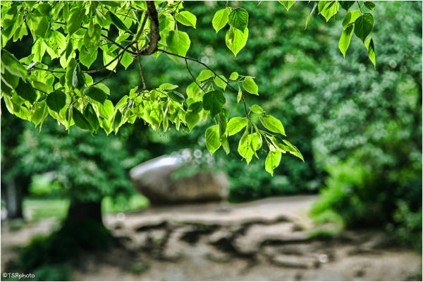 Sunlight in leaves