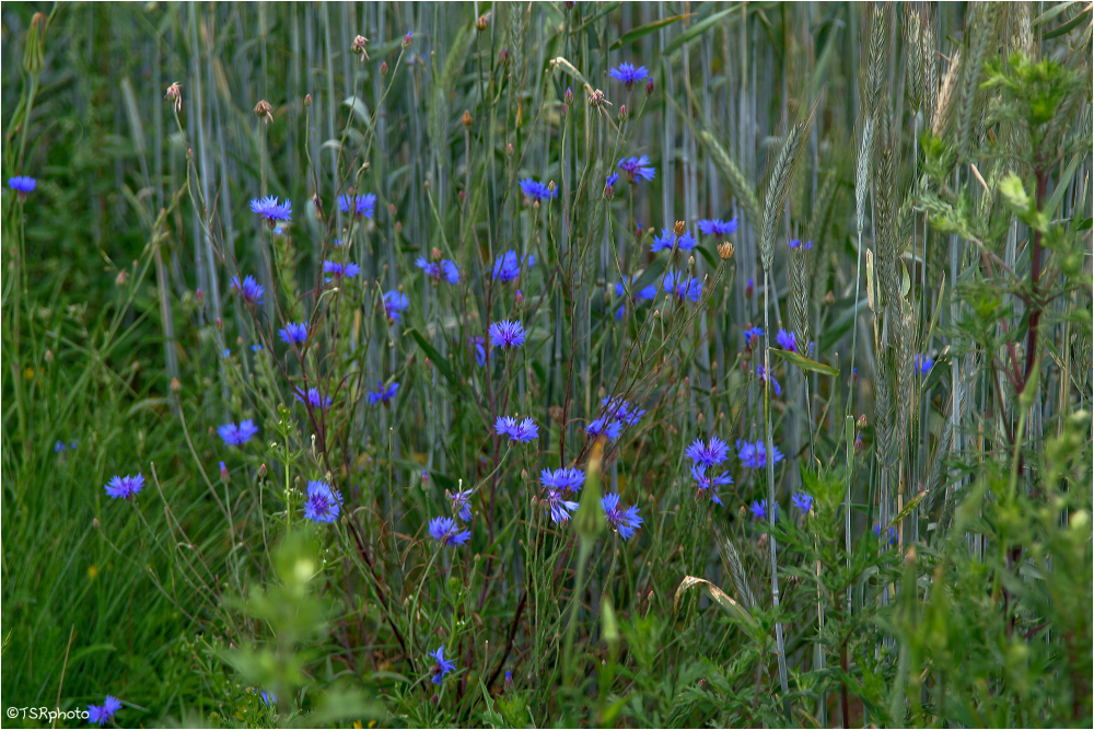 Colors of meadow 5