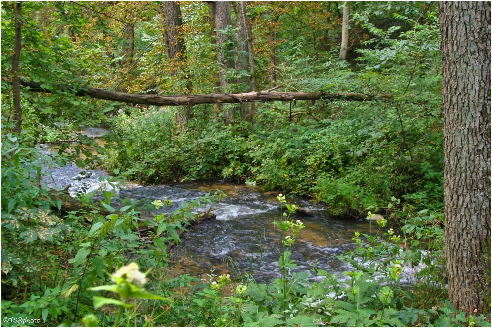 "Primeval forest 2 ""Solska"""