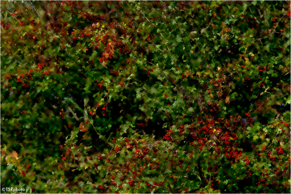 Red green autumn