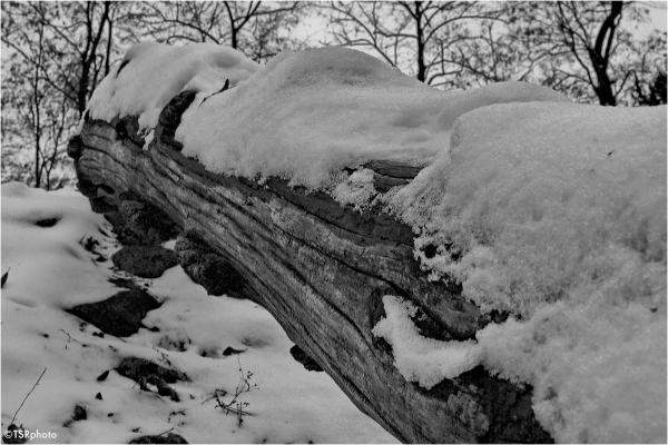 Snow & wood