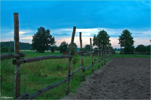 Morning on the farm.