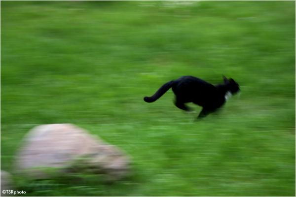 Panther ?